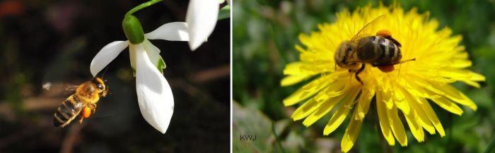 Bienen Ammersee