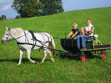 Urlaub auf dem Bauernhof - Pferdehof Shire-Gestüt
