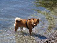 Bayern Urlaub mit Hund in der Ammersee-Region
