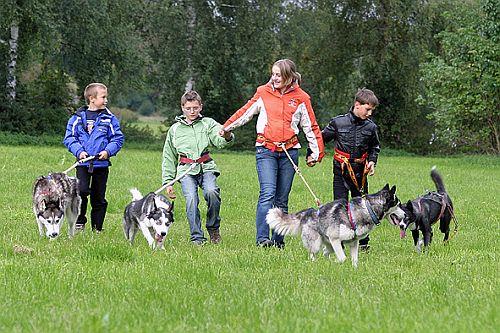 Husky kennenlernen Husky-Schlittenfahrten, mit Huskys bergauf und bergab - Winterurlaub in Vorarlberg