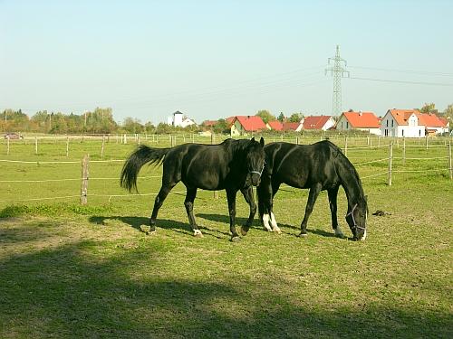 Pferdekoppel Pferdehof Lindenhof