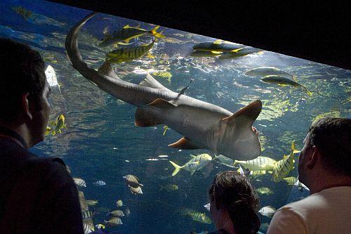 Munich Sea Life Centre Pictures