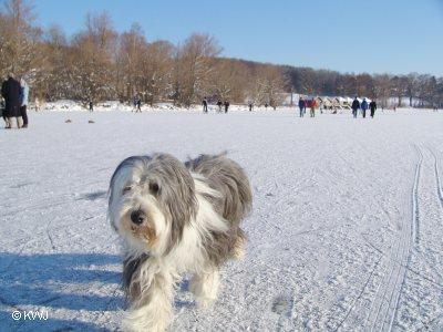 Bayern urlaub mit hund